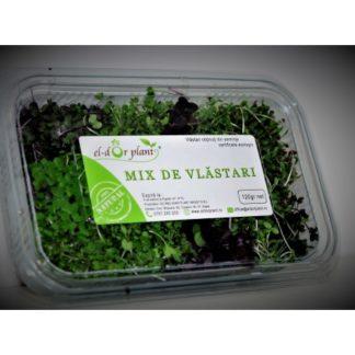 Mix de Vlăstari EL-Dor Plant
